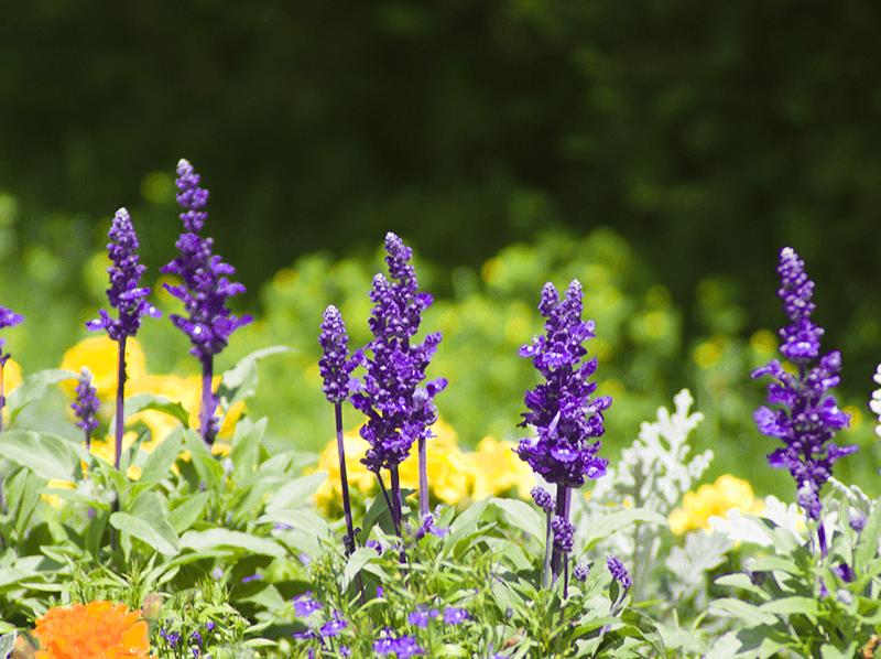 Blumenschmuck Wettbewerb